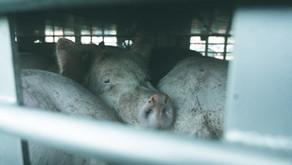 Bielefeld Animal Save