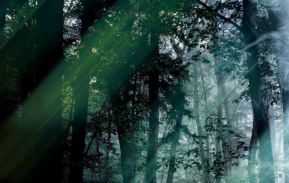 WaldSchratBackground_edited.jpg