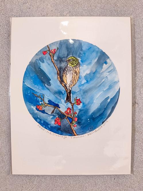 Silvereye Tauhou By Kellie Eathorne