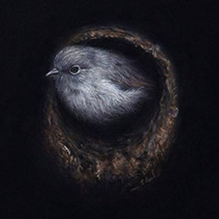 """Toutouwai"" (South Island Robin) By Karen Raiken Neal"