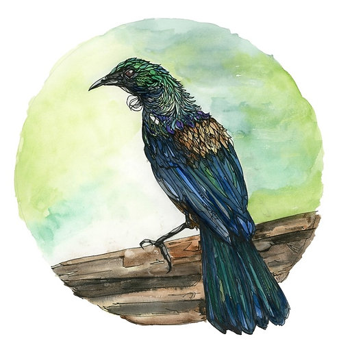 New Blue Tui By Kellie Eathorne