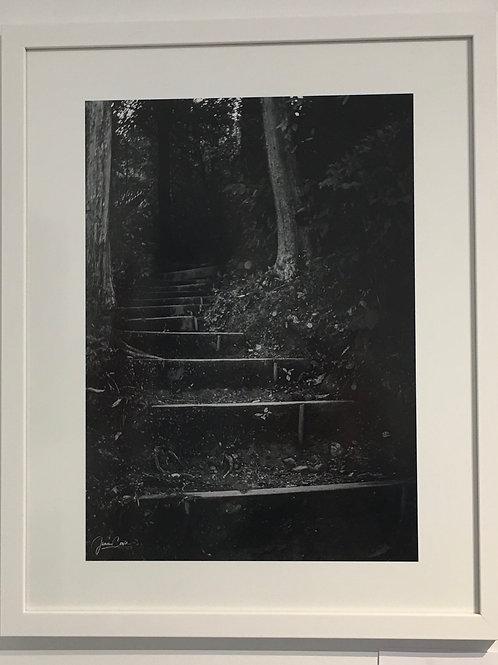 Looking Ahead (Havelock) By James Cowie