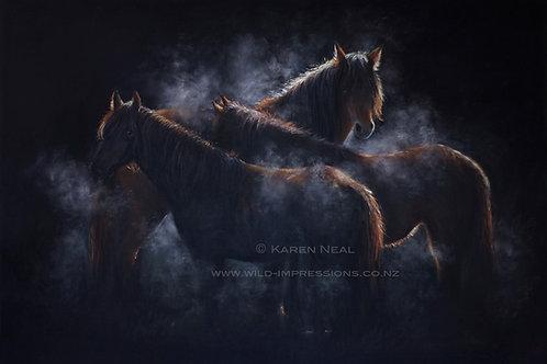Kaimanawa Dawn Spirit NZ