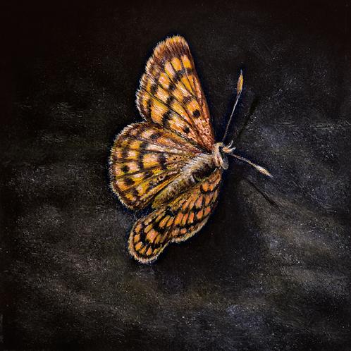 Common Copper By Karen Rankin Neal