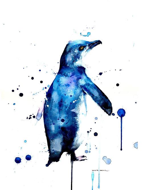 Little Blue Penguin/Korora