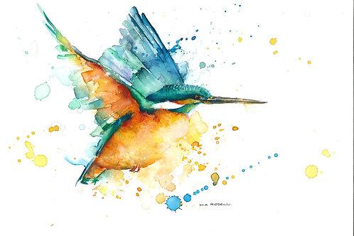 Kotari/Kingfisher By Mia Riddell