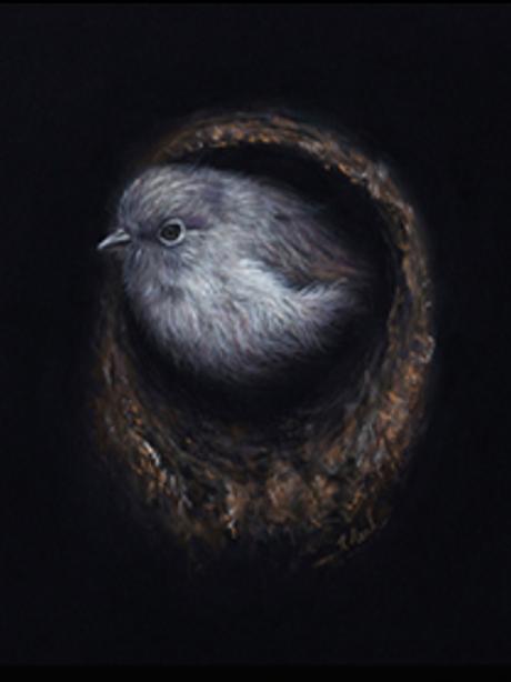 Toutouwai By Karen Rankin Neal