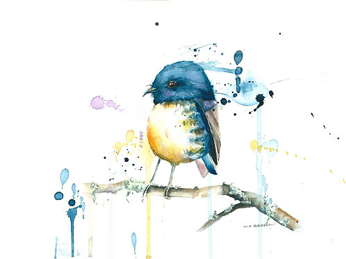 South Island Blue Robin By Mia Riddell