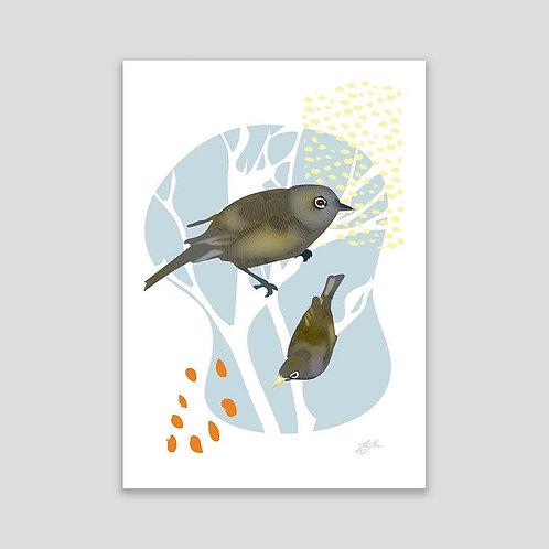 Tauhou - Silvereye By Tui Johnson