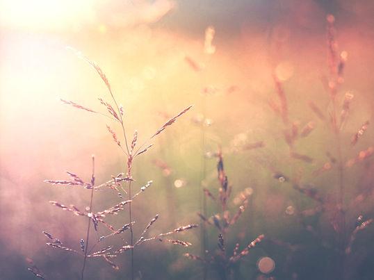 Sunny field Aura Camacho-Maas