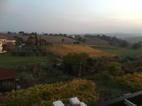 Vini Venturi - Wine from Le Marche, Italy