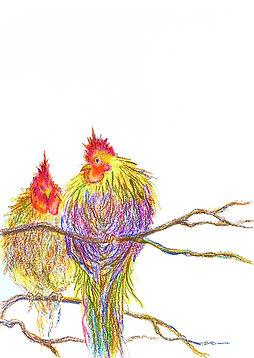なが鳴きのおしどり鶏.jpg