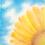 Thumbnail: 夏の終わり