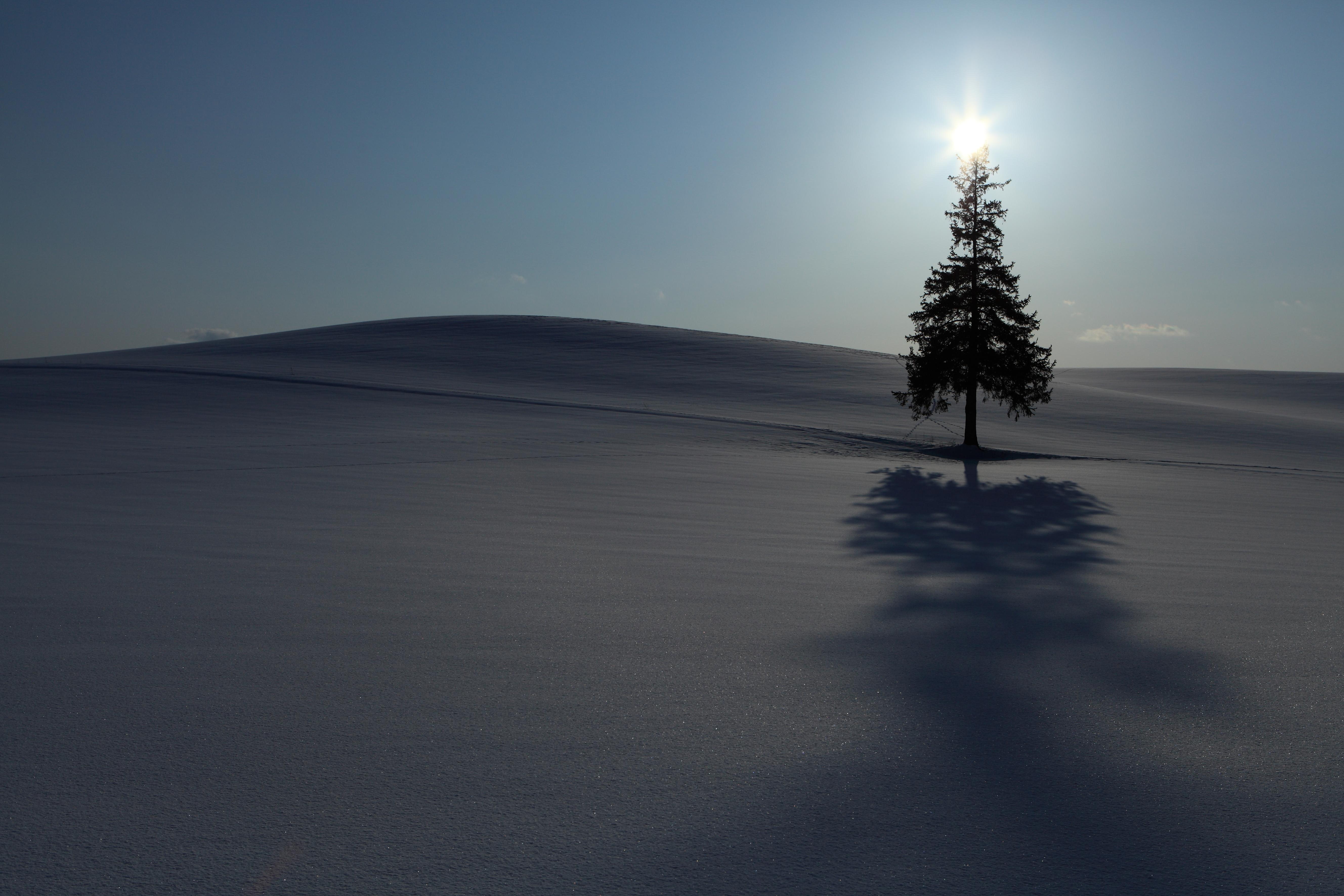 雪原の一本