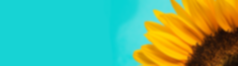 sunflower-3684874_1920.png