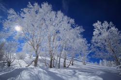 美ヶ原の霧氷2