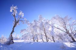 美ヶ原の霧氷