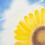 Thumbnail: ひまわり