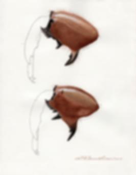 セミの幼虫の前足