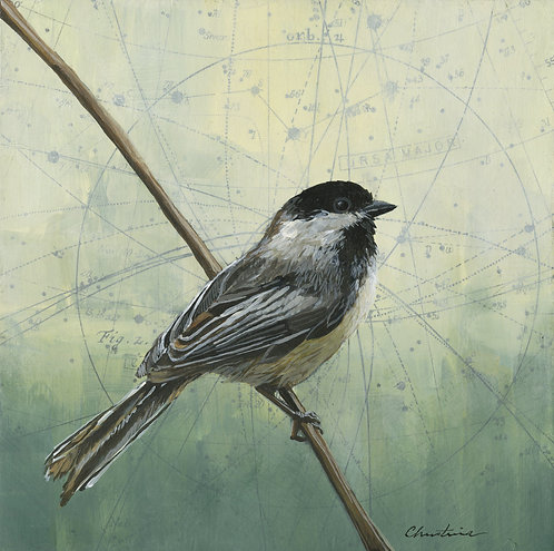 Big Dipper, Little Chickadee #1 | 8'' x 8''