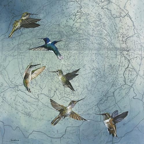 Hummingbird Soiree #2   18'' x 18''