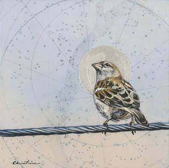 Illuminated Sparrow #2