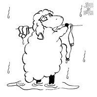 כבשה.jpg
