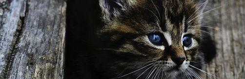 Katzenmedizin.jpg