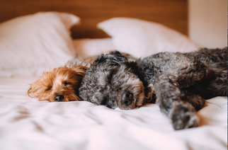 Sleep Matters - Here's How to do it Better