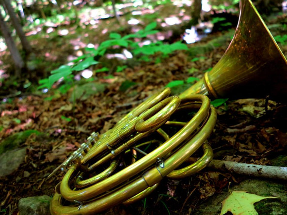 horn in the woods, Orford, Québec, 2015
