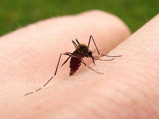 Cómo luchar contra las picaduras de mosquito
