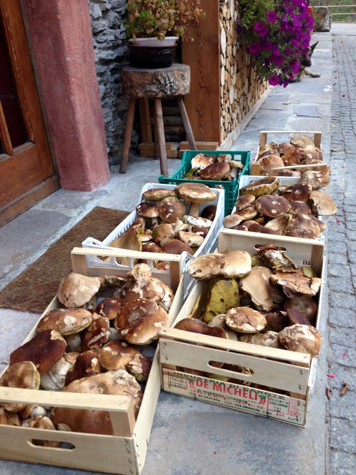 Hand picked mushrooms Val Maira