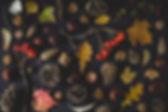 가을 토큰
