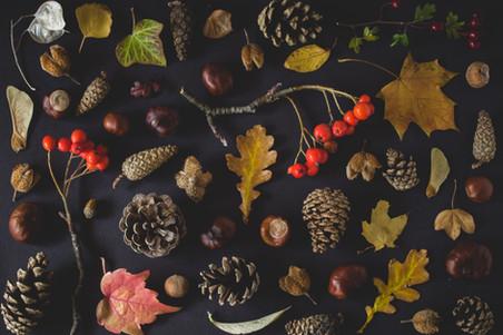 Jordan's Courtyard Autumn Walk