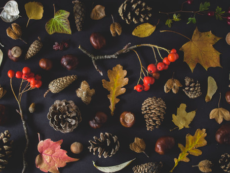 Autumn Collections - How to Stimulate Creativity in Your Child This Autumn!
