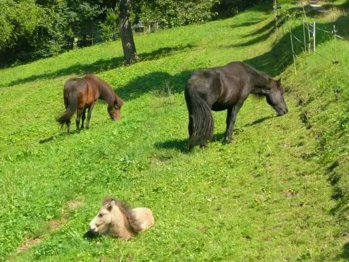Stuten mit Fohlen