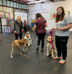 Leaving Dogs And Treats