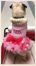 EDITH therapy dog edith dressed.jpg