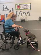 Therapy dog training wheelchair.jpg