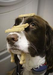 brody treats on face.jpg