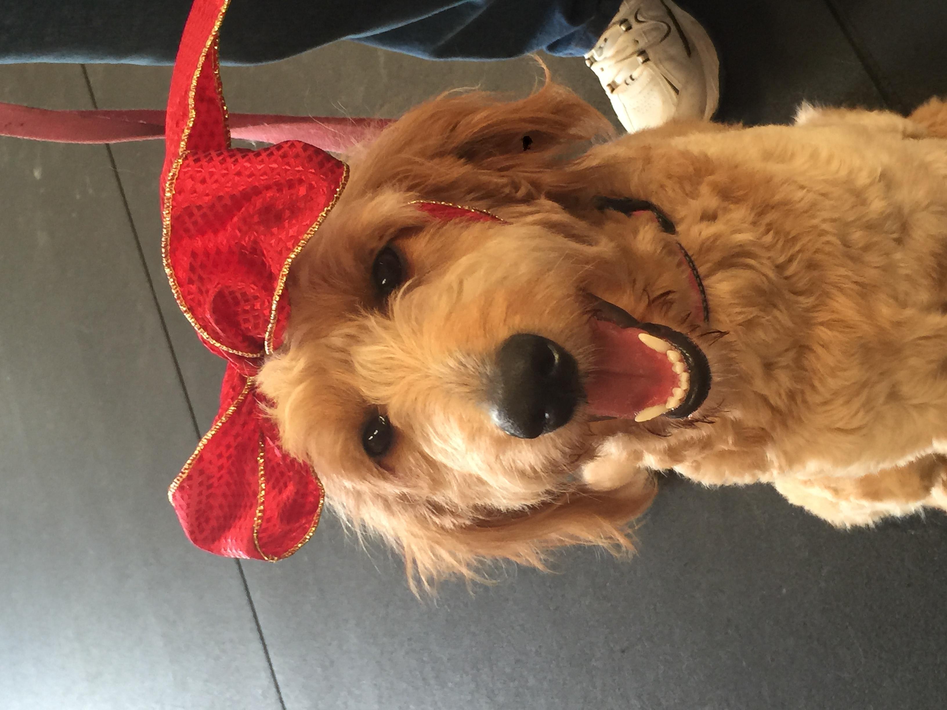 Jackie's Basics and Beyond Dog Training