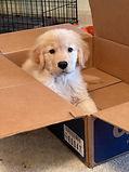 sophie in box.jpg