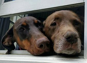 ann's dogs.jpg