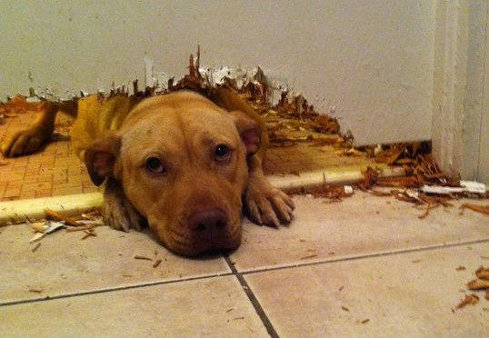 Separation-Anxiety-dog-eating-door.jpg