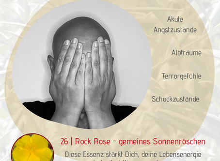 Thema Angst | Rock Rose