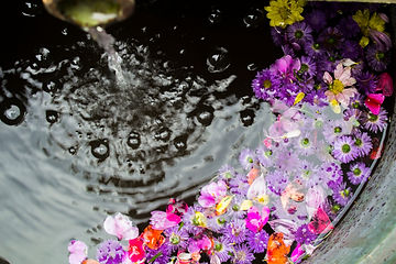 Canva - Flowers Floating on Water.jpeg