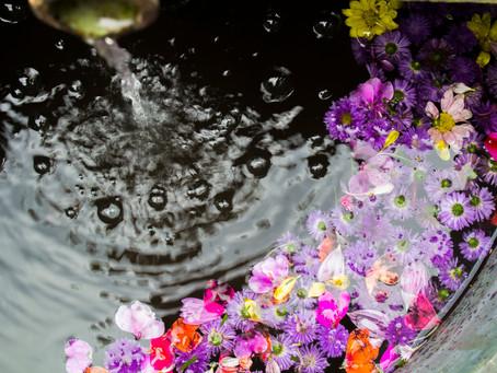 Bachblüten | vorübergehend inaktiv