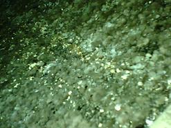 mold-coil.bmp