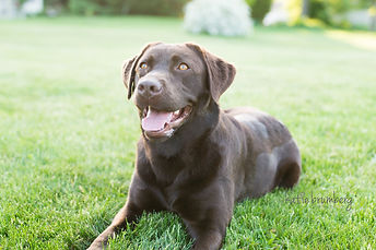 The Incredible K9 Dog Training