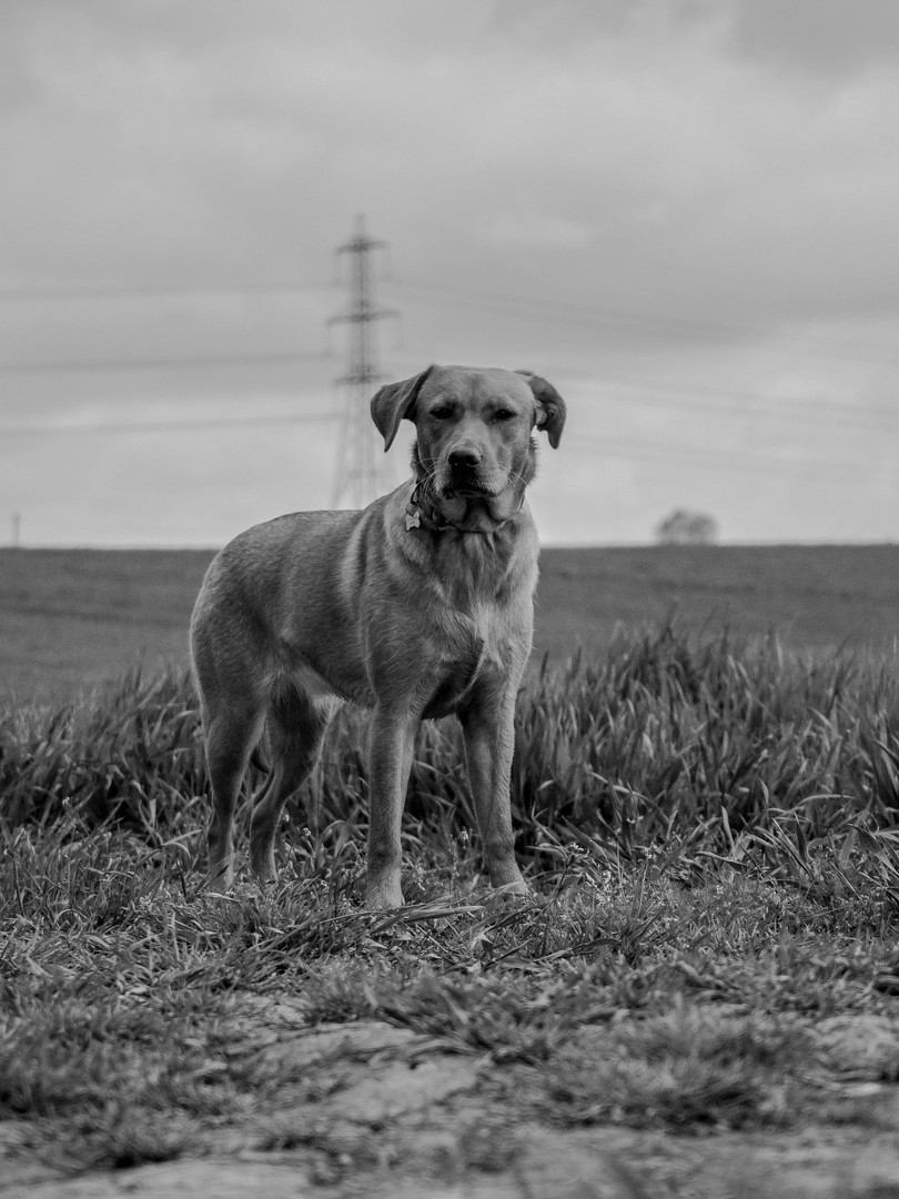 SHEFFIELD PET PHOTOGRAPHER